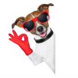 It's OK sign from a dog wearing sunglasses