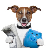 humorous illustration of dog holding money and a piggy bank.