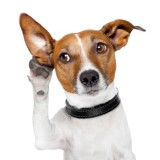 humorous photo of a dog listening