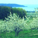 Orchard protected by PDR program in Michigan.