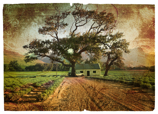 illustration of house and large tree at edge of field