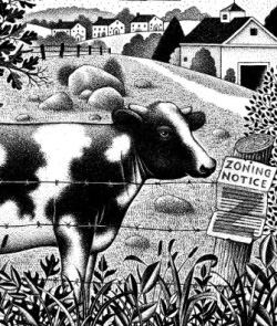 Illustration of cow next to zoning notice sign by Paul Hoffman