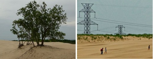 Natural beauty mixes with transmission lines along Indiana dunes