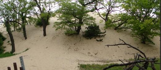 Dunes in Lakeshore Dunes National Seashore in Indiana
