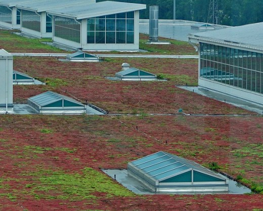 Green roof of Ford River Rouge Assembly building