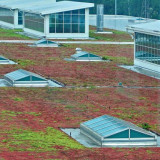 part of huge green roof at Ford Motor's River Rouge assembly plant in Dearborn, Michigan