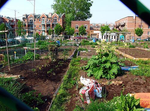 Urban farms in Detroit