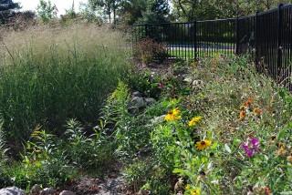 Photo of a rain garden