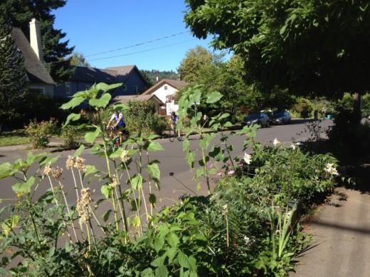 Walk3-planting-strip-Sellwood