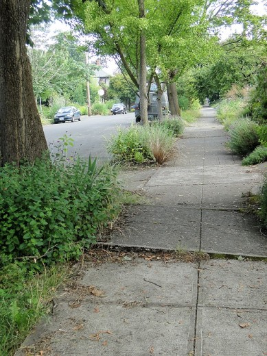 Sidewalk slab has been uplifted by tree roots.
