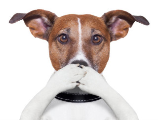 image of dog covering its mouth